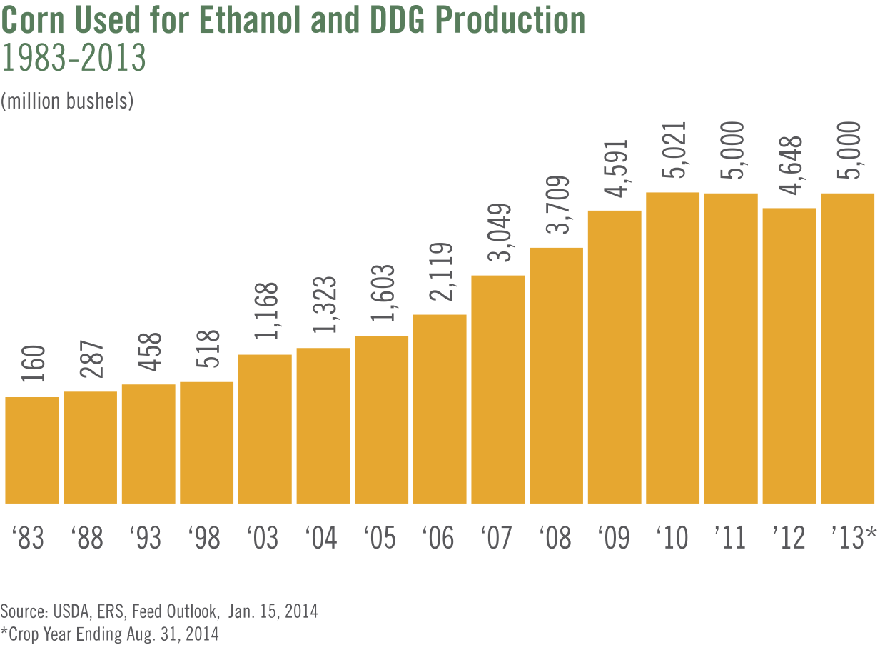 corn-used-of-ethanol-and-ddg-production