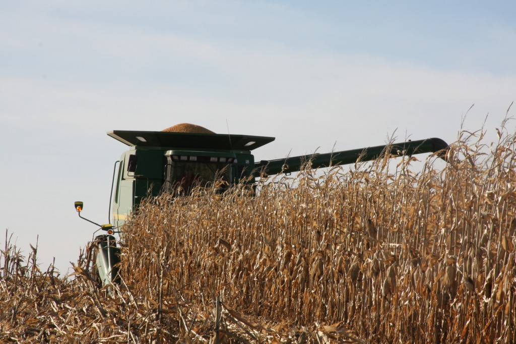 Harvesting the record crop